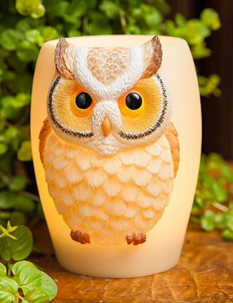 55028 hoot owl